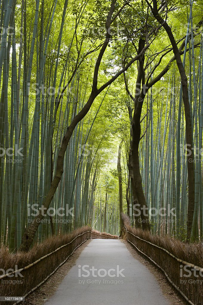 A path with bamboo trees on either side stock photo
