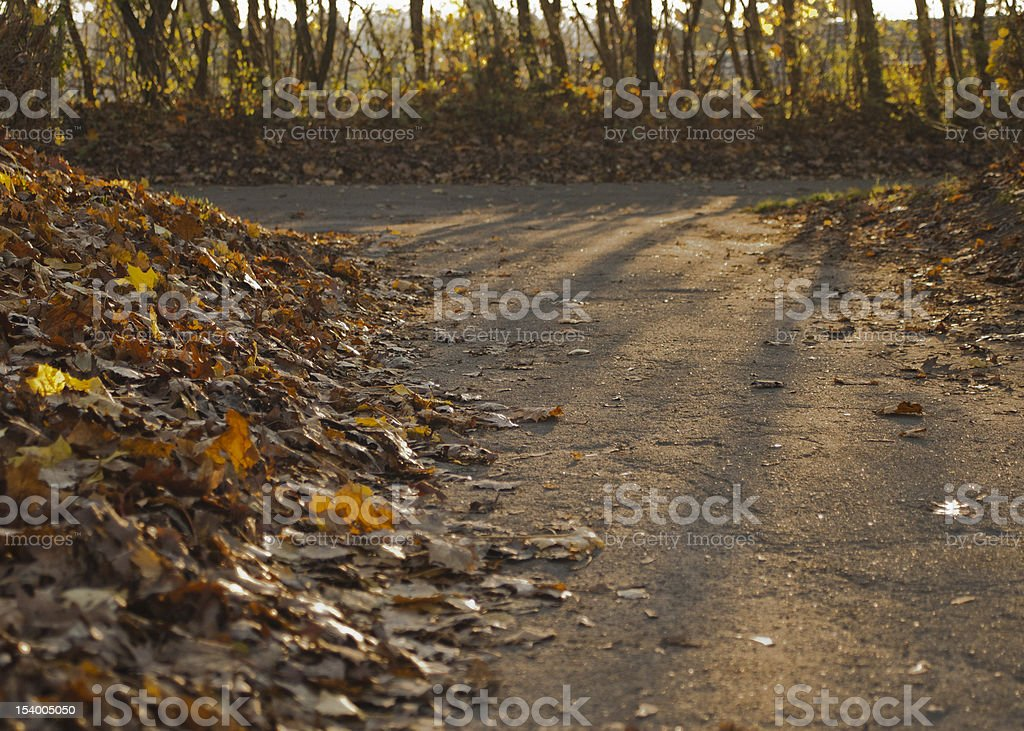 Path with brown leaves in fall stock photo