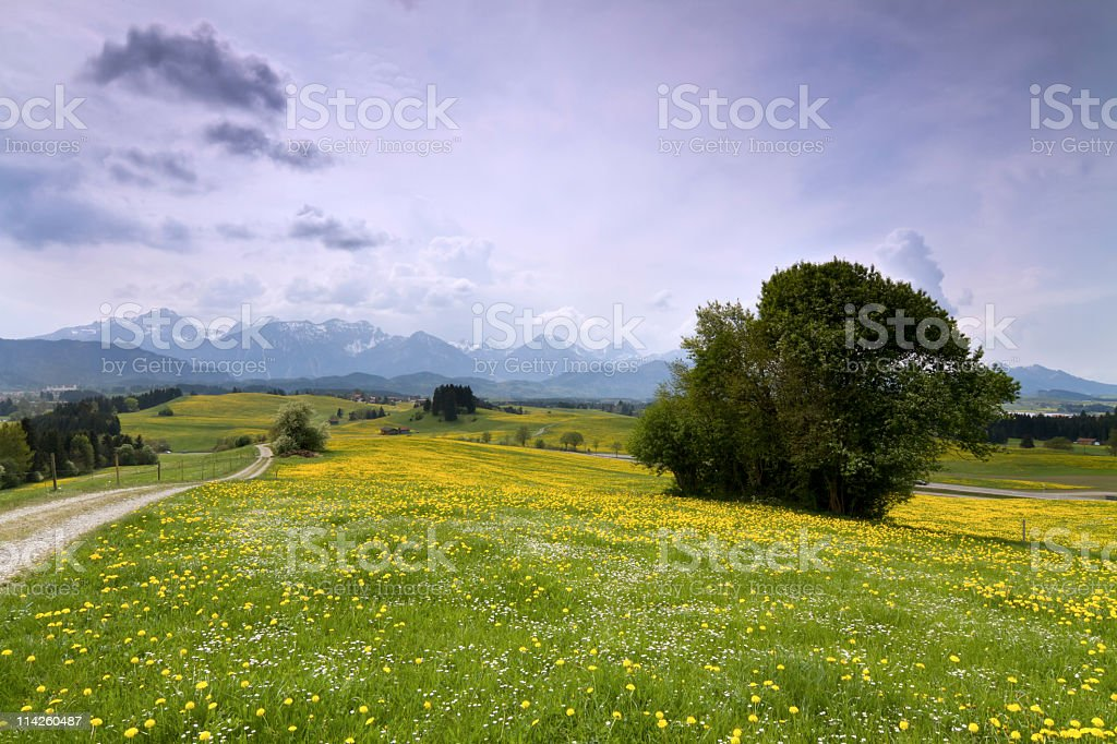 path with tree royalty-free stock photo
