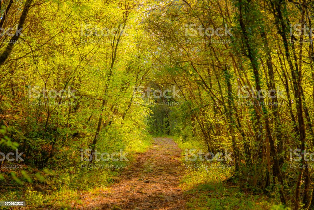 A pathe in the woods stock photo