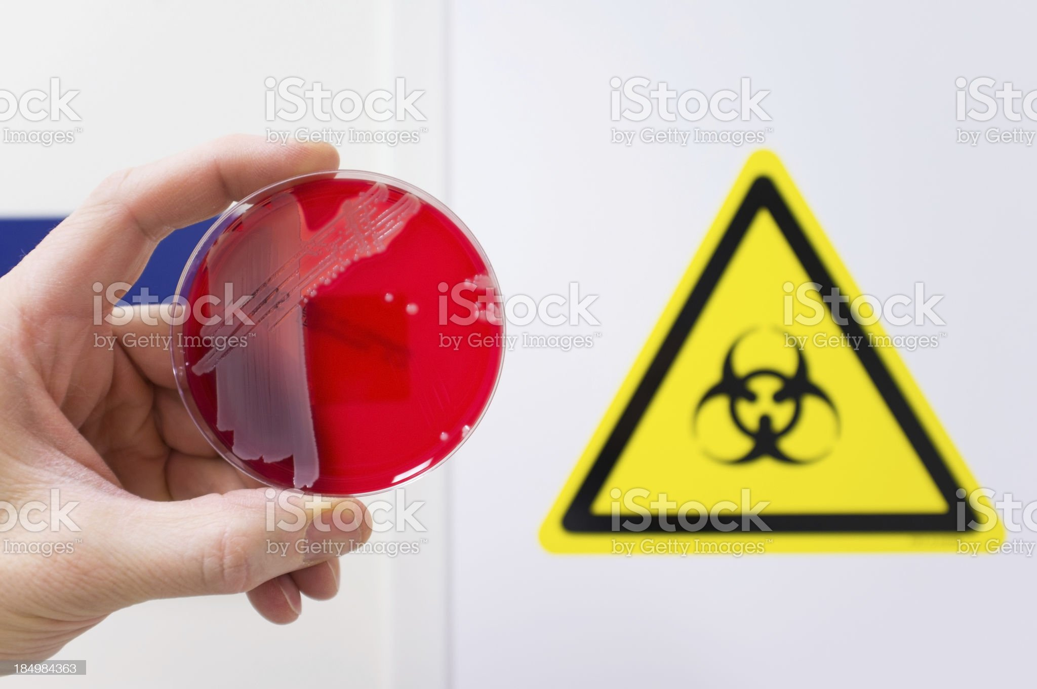 Pathogenic bacteria royalty-free stock photo