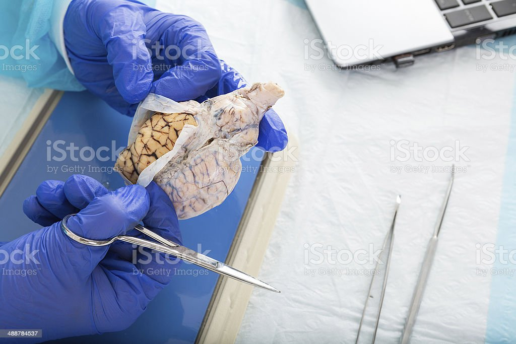 Pathologist opening a tissue sample in the lab royalty-free stock photo