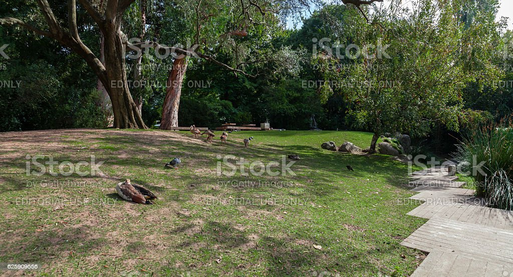 Paths, lawns and birds in the garden of the Calouste Gulbenkian stock photo