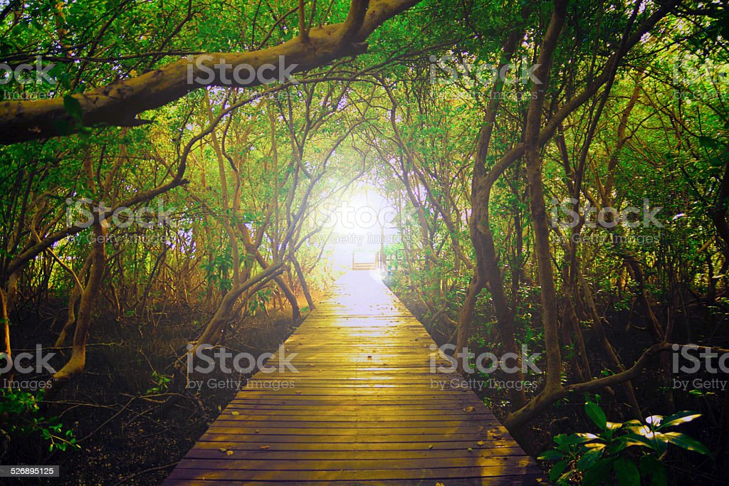 Paths of Light royalty-free stock photo