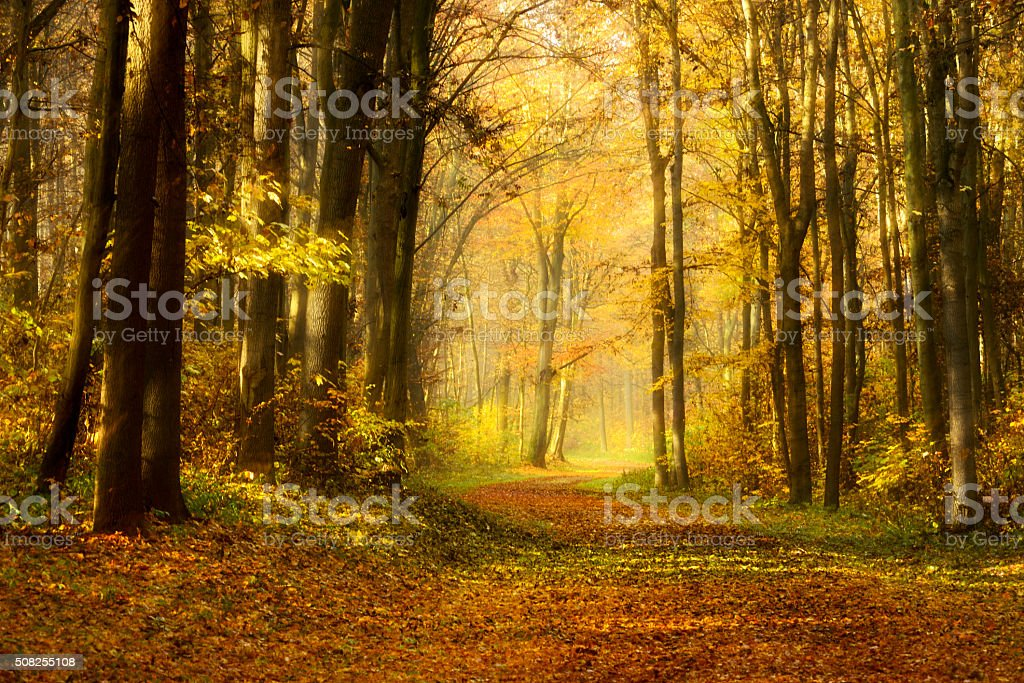 Pathway Covered by Leafs through Colourful Forest in Autumn stock photo