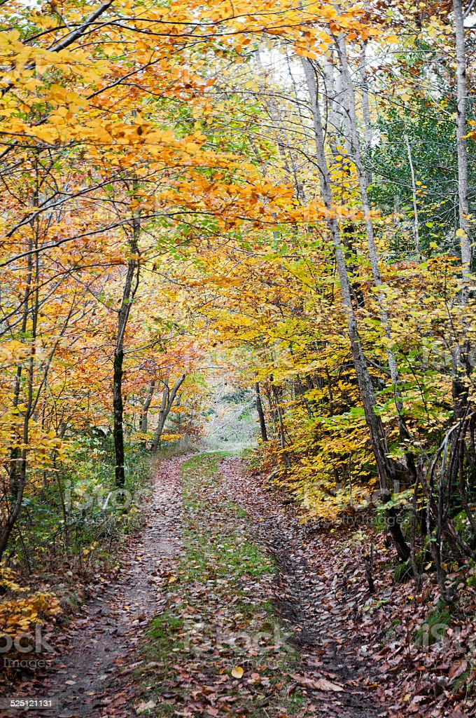 Pathway in autumn stock photo