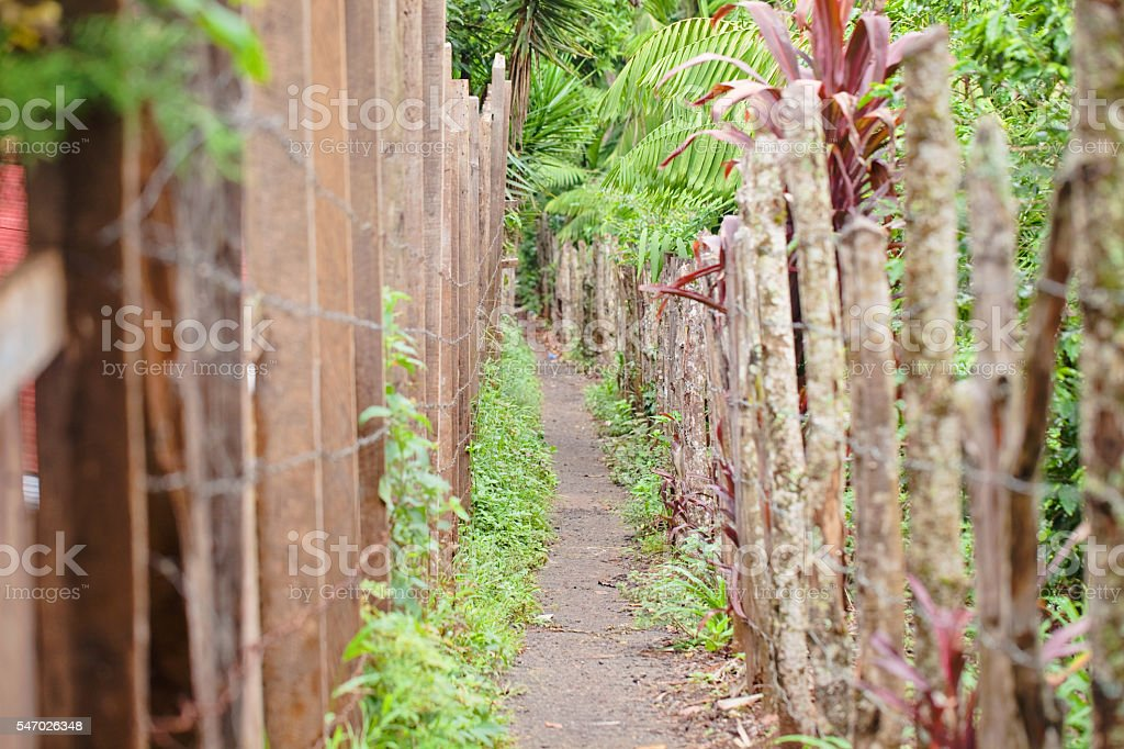 Pathway in Countryside Guatemala stock photo