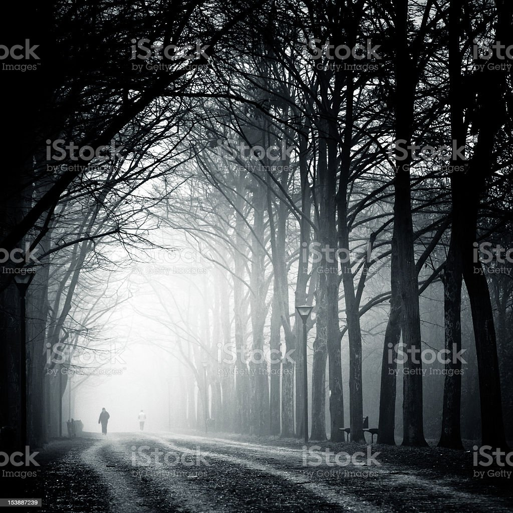 Pathway in forest in foggy weather stock photo