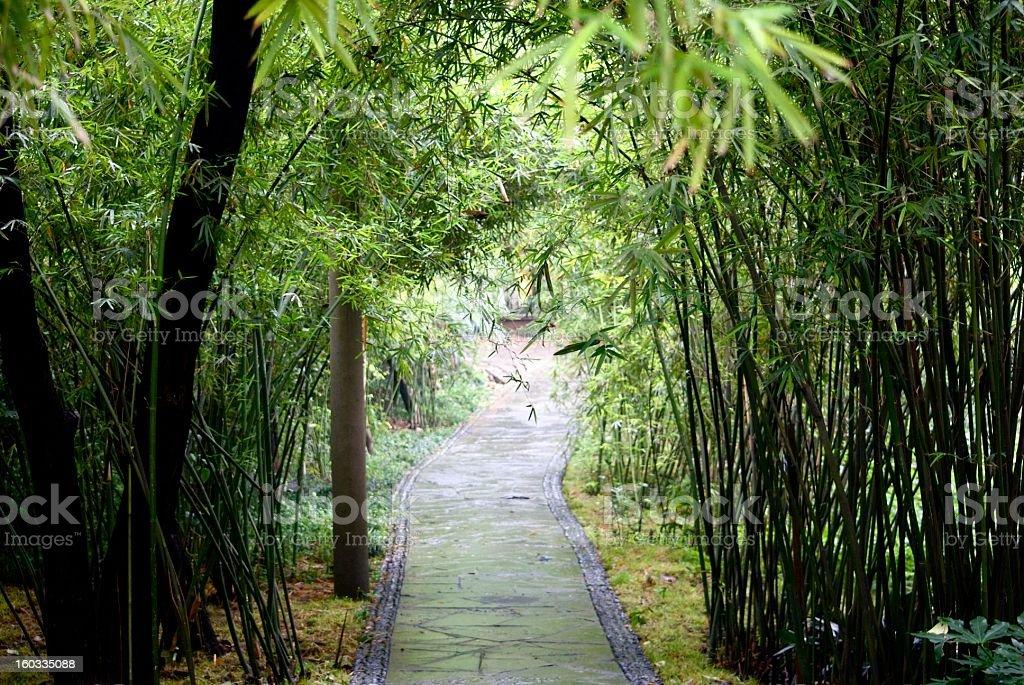 Pathway in Panda Zoo royalty-free stock photo