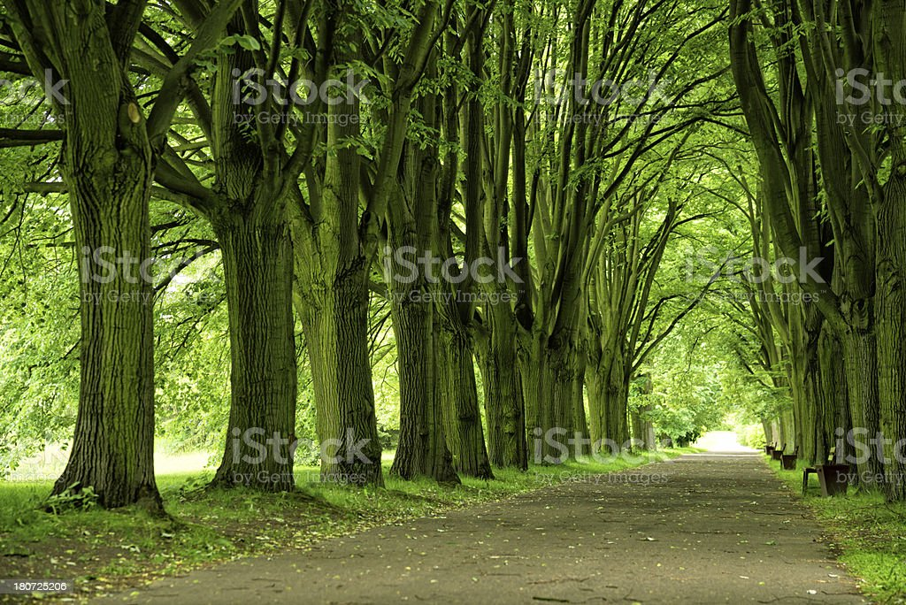 Pathway in Park - 36 Mpx stock photo