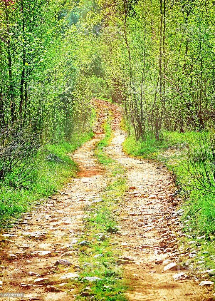 Pathway in secluded deciduous forest stock photo