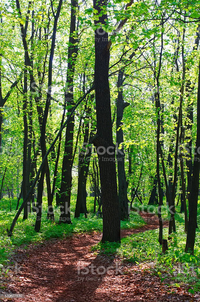 Pathway in spring forest royalty-free stock photo