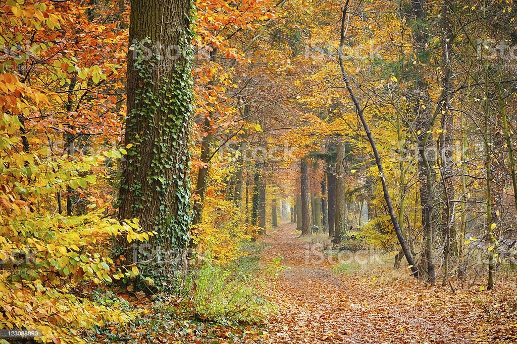 Pathway in the autumn forest royalty-free stock photo