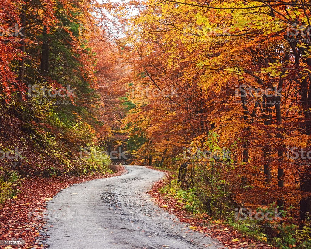 Pathway in the Autumn Forest, Slovakia stock photo