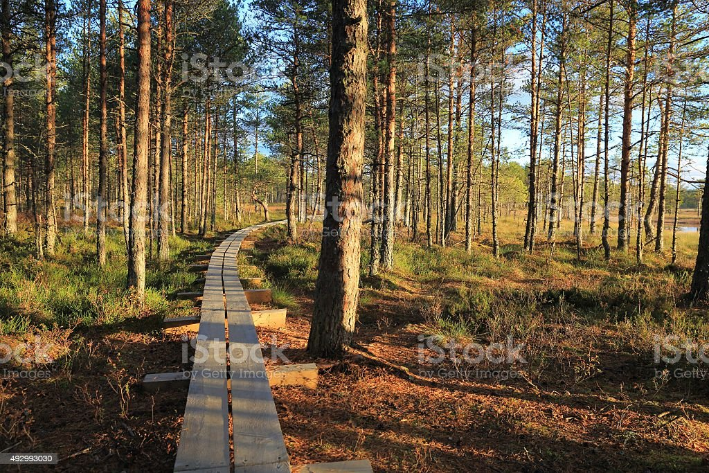Pathway in the bogs stock photo