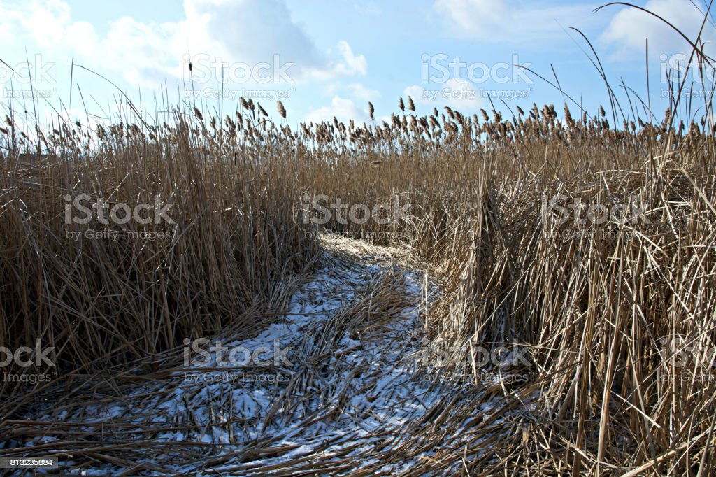 Pathway in the Marsh on a Bright Winter Day stock photo