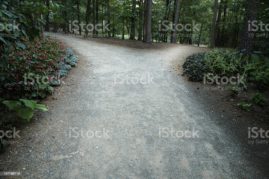 Pathway in the woods that leads to a fork stock photo