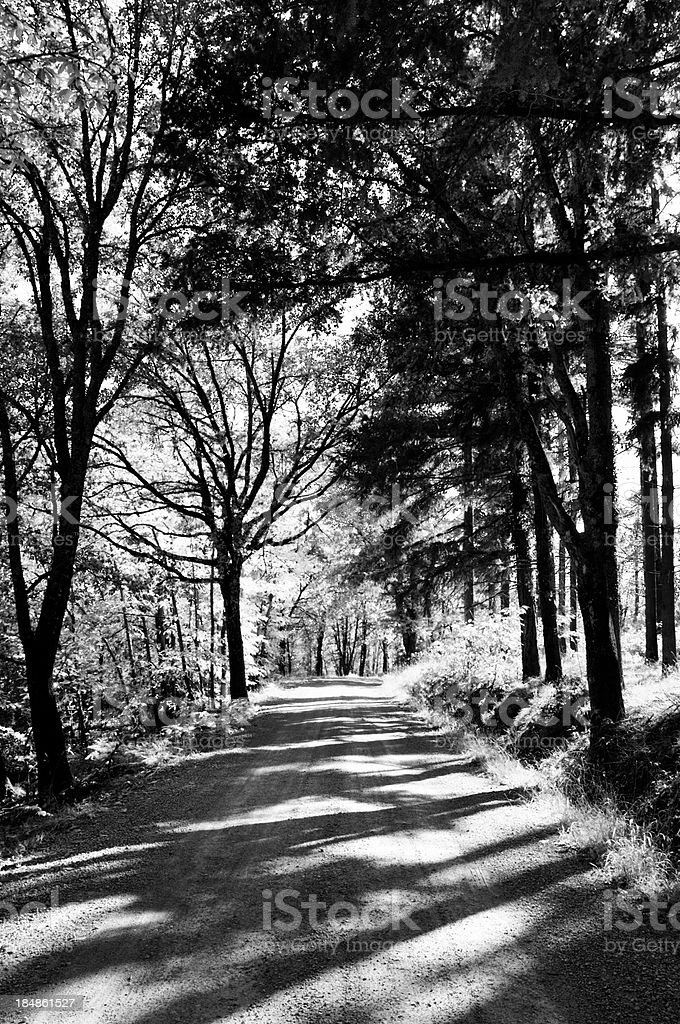 Pathway in Tuscany.Black And White. royalty-free stock photo