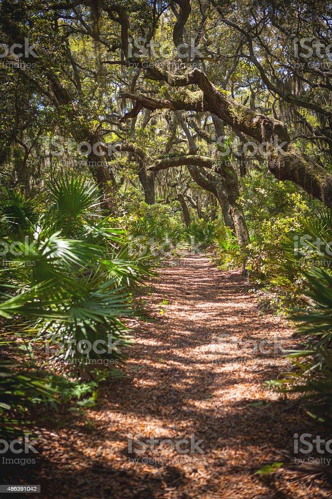 Pathway on Cumberland Island in Georgia stock photo