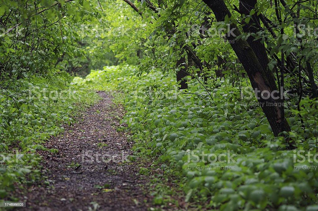 Pathway royalty-free stock photo