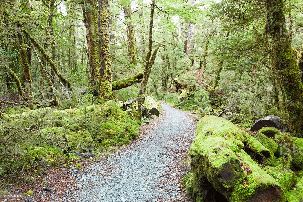 Pathway through rainforest , stock photo