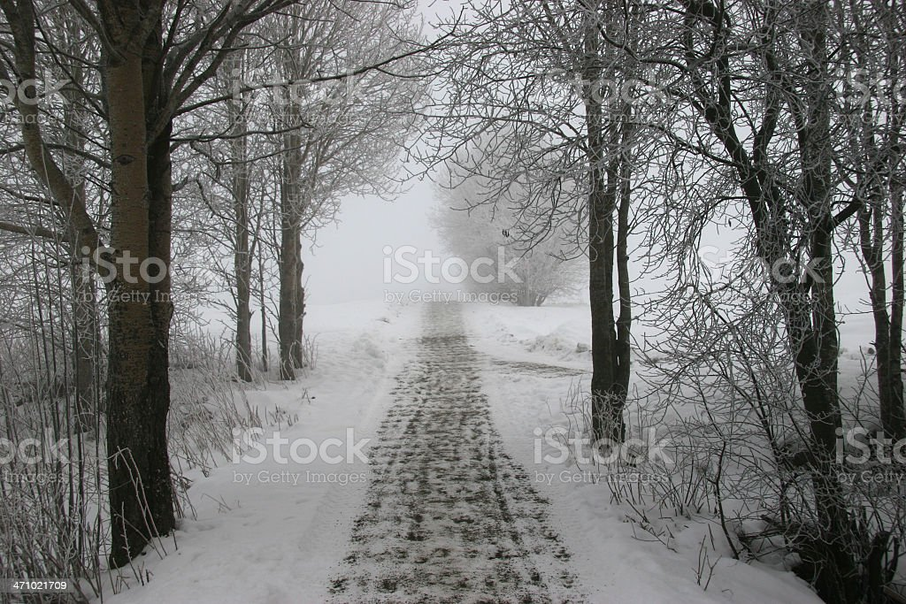 Pathway through winter forest royalty-free stock photo