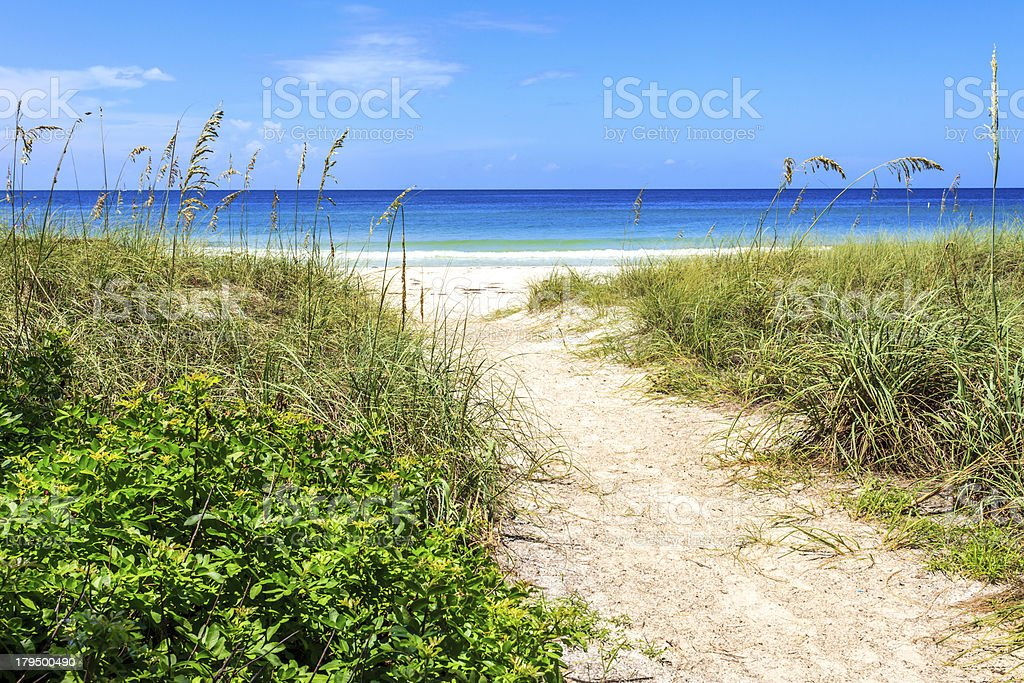 Pathway to Beach with Sea Oats and Beach Vegetation. royalty-free stock photo