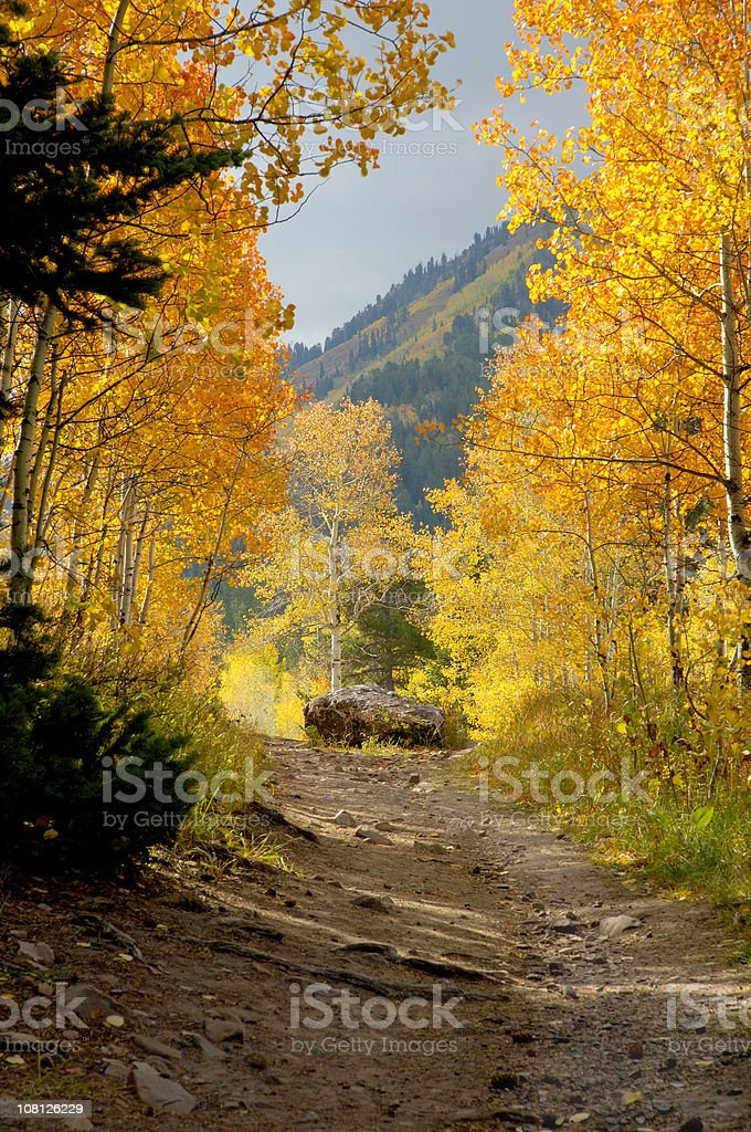 Pathway To Fall stock photo