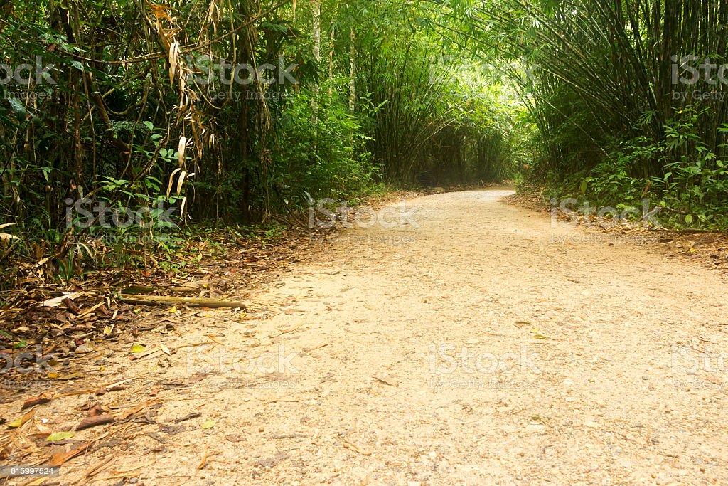 Pathway to jungle stock photo