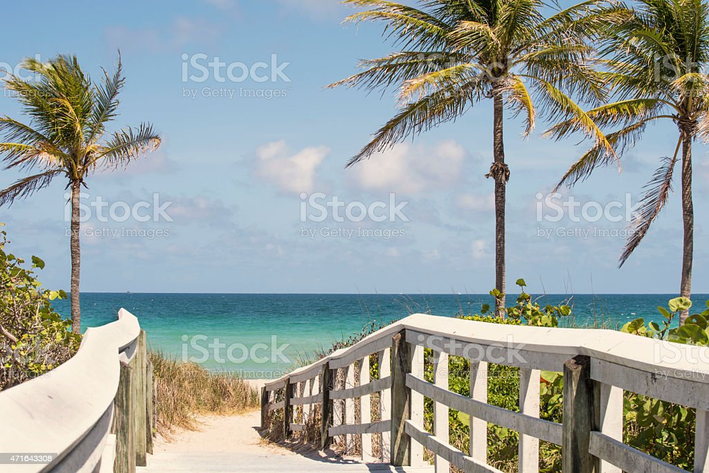Pathway to the beach with palm trees stock photo