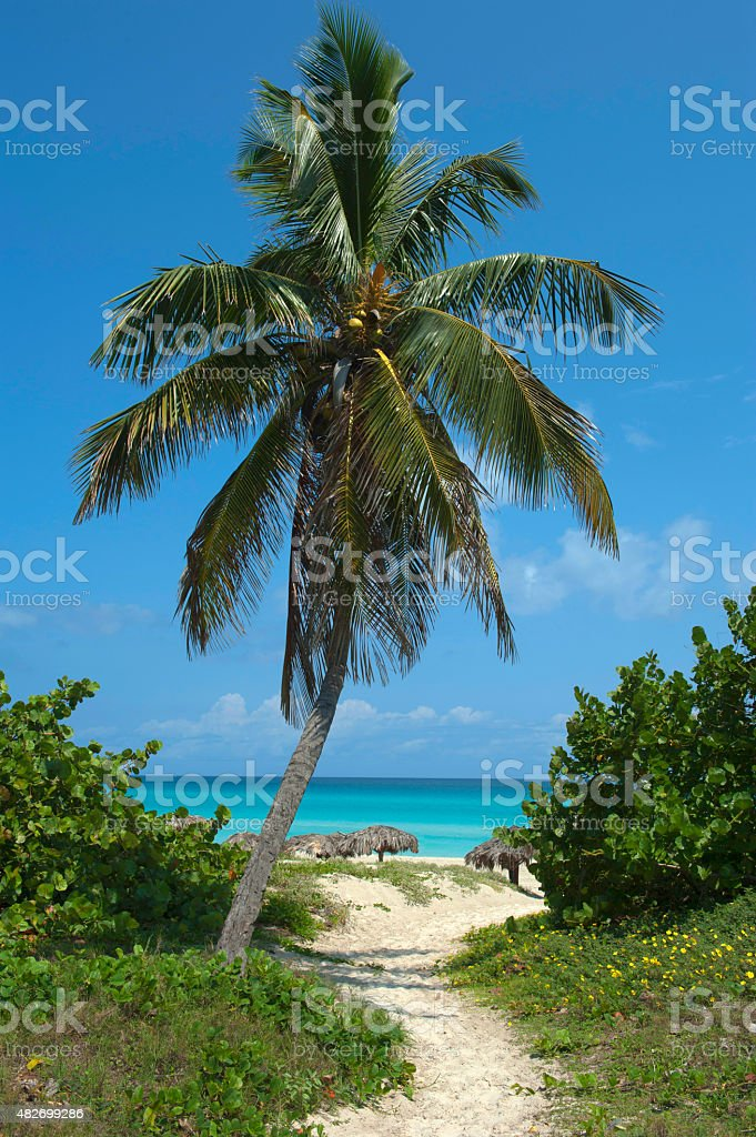 pathway to Varadero beach in Cuba stock photo