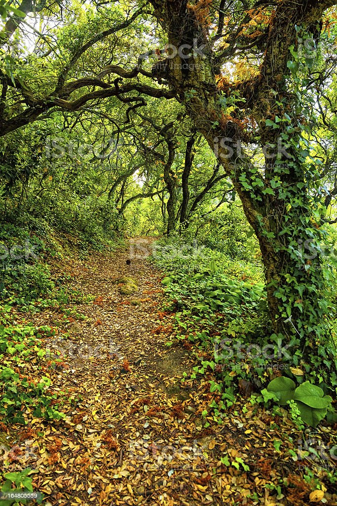 pathway trough a wild forest stock photo