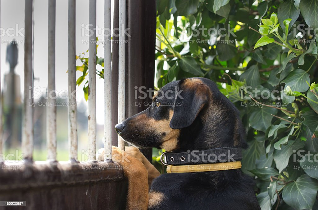 Patient dog stock photo