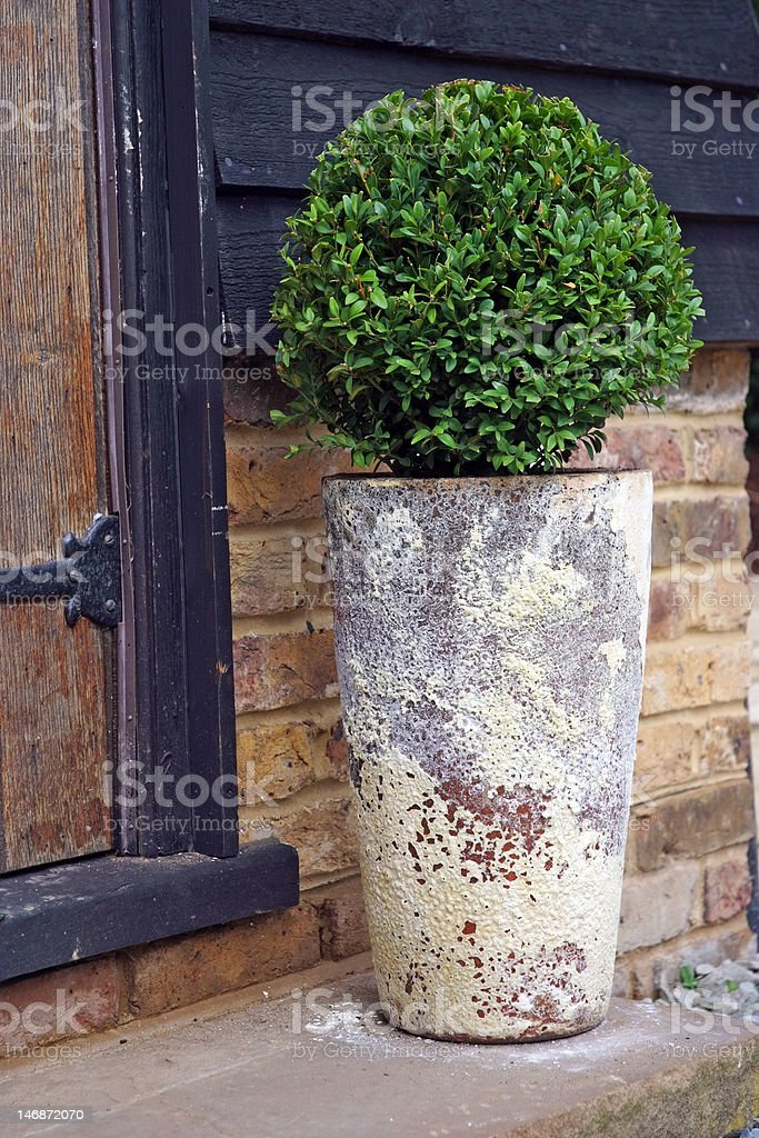 Patio tree royalty-free stock photo