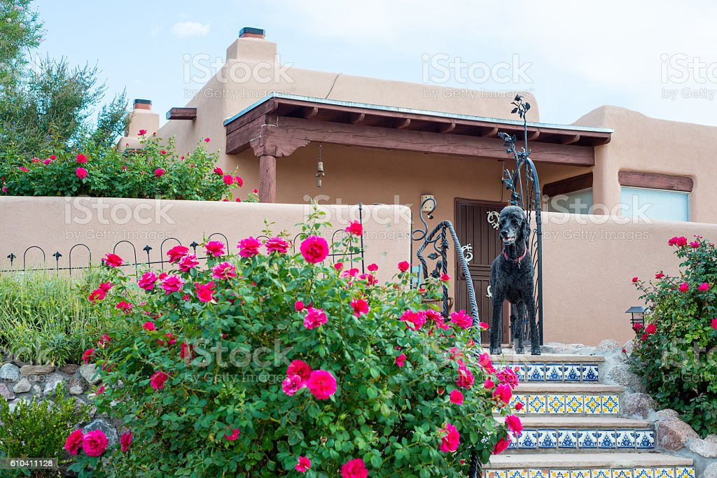 Patio with Roses, Tiled Stairs and Standard Poodle stock photo