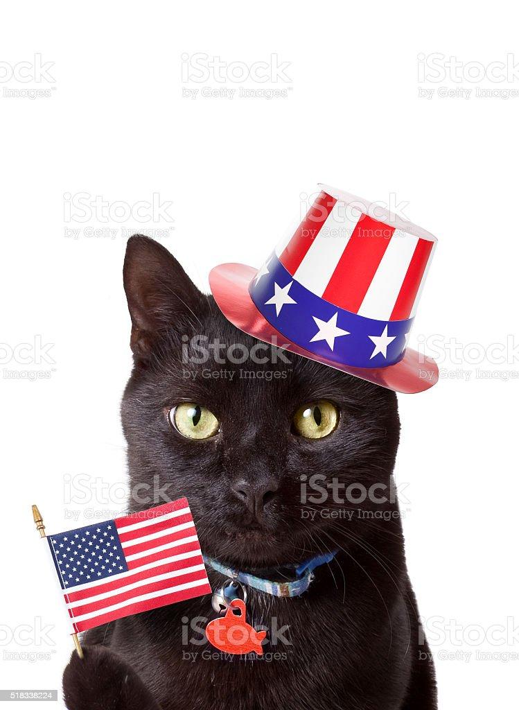 Patriotic Black Cat stock photo