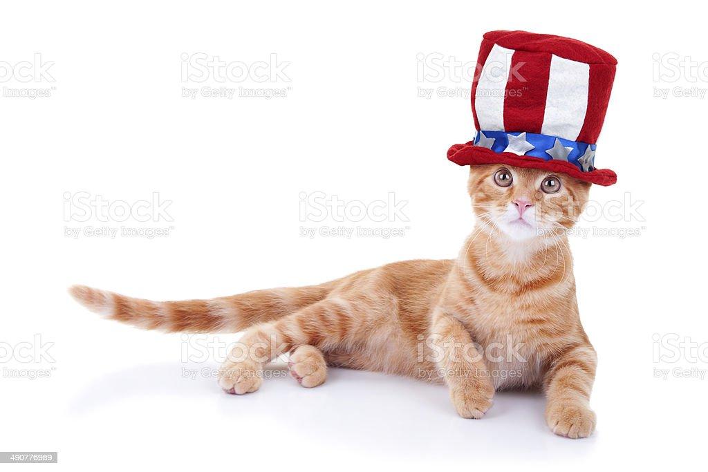 Patriotic Cat stock photo