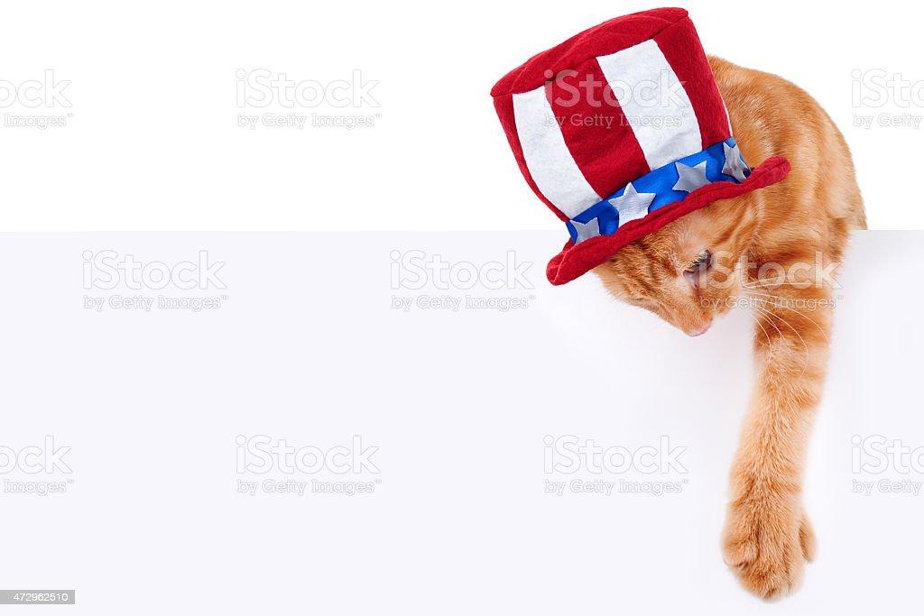 Patriotic Cat Sign stock photo