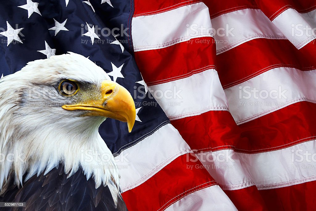 Patriotic north american bald eagle on american flag stock photo