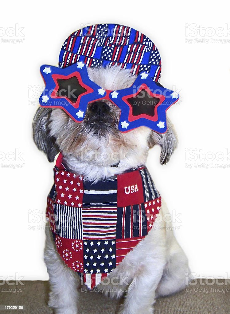 Patriotic Pooch royalty-free stock photo