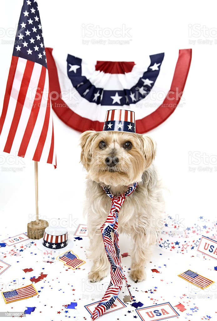Patriotic Pup royalty-free stock photo