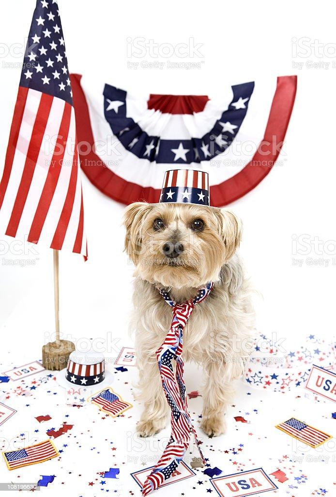 Patriotic Pup stock photo