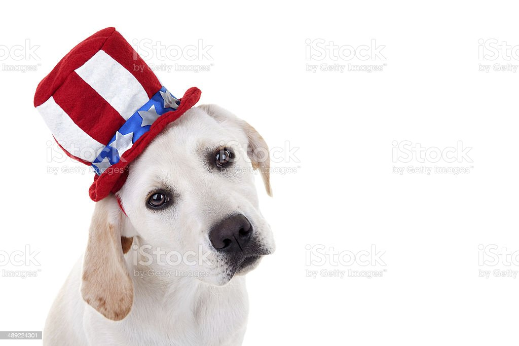 Patriotic Puppy Dog stock photo