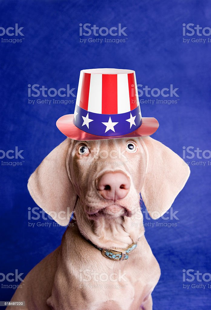 Patriotic Puppy Wearing American Hat stock photo