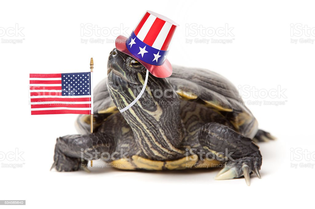 Patriotic Turtle stock photo