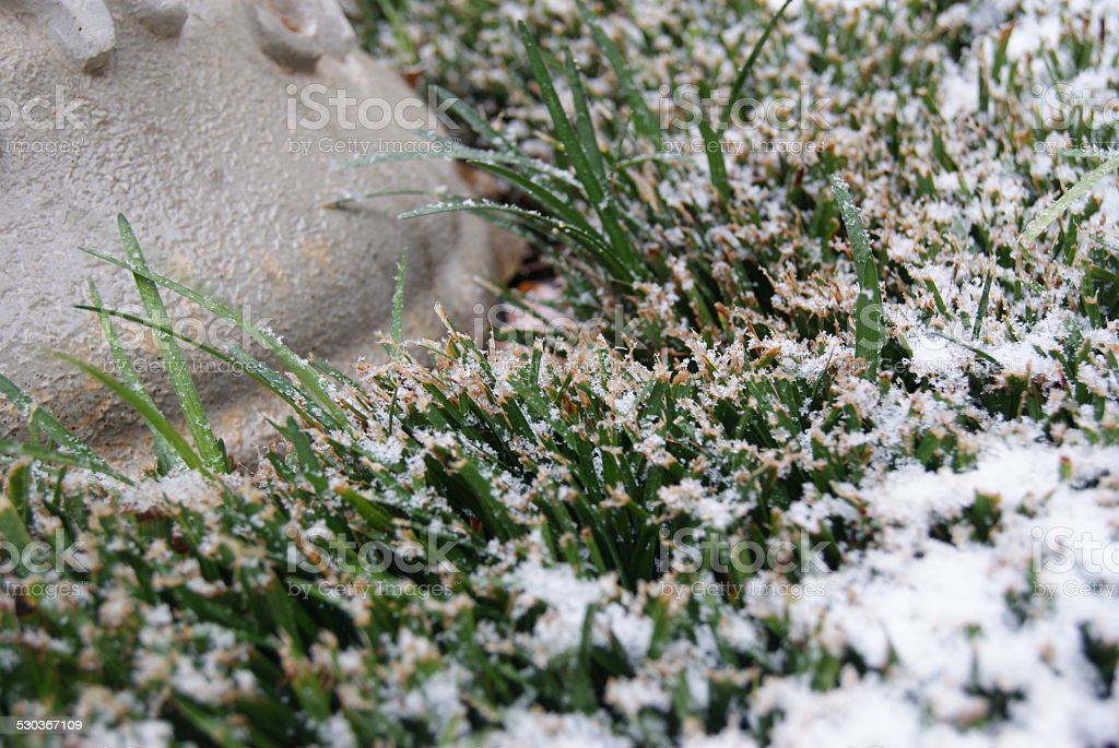 Pattered Grass royalty-free stock photo