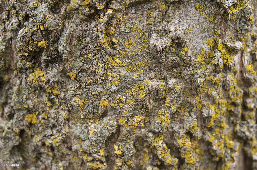Patterened Tree with Lots of Moss Growth stock photo