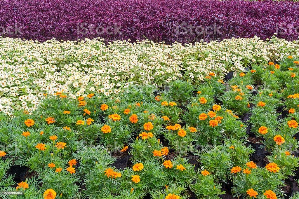 Motifs et couleurs de fleurs jardin photo libre de droits