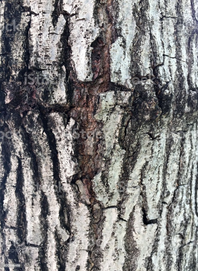 Pattern from Bark of tree, gray and brown color texture background. stock photo