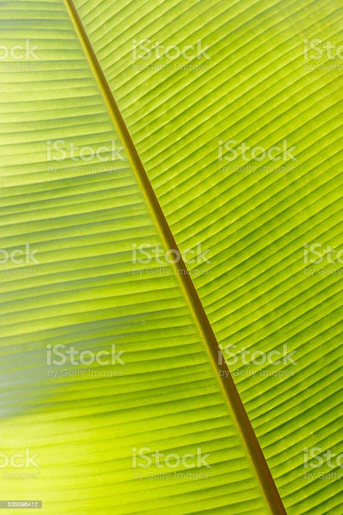 pattern leaf banana stock photo